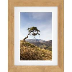 Langdale Oak Sepia