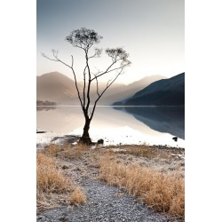Ullswater Tree Colour