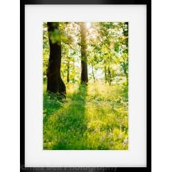 Woodland Walk 4