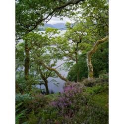 Ullswater Island