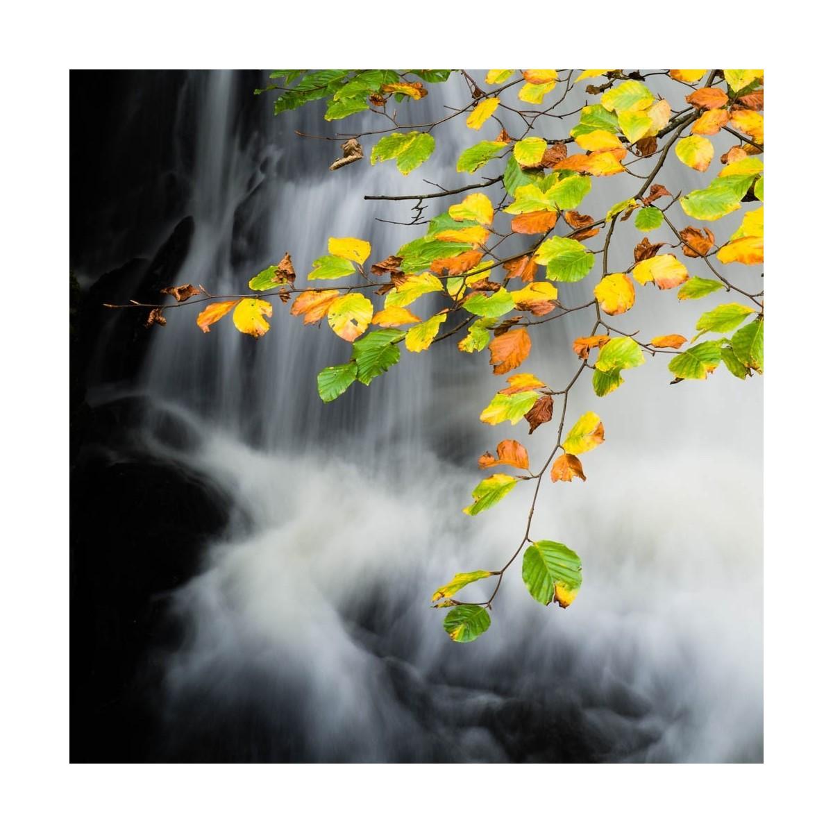 Thirlmere Autumn