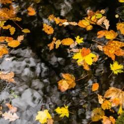Brathay Autumn