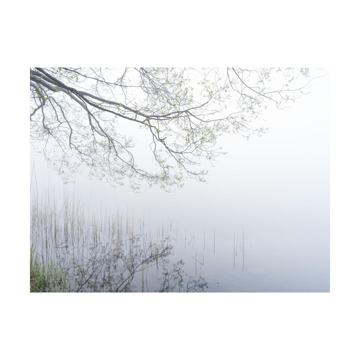 Grasmere Mist