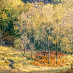 Borrowdale Autumn