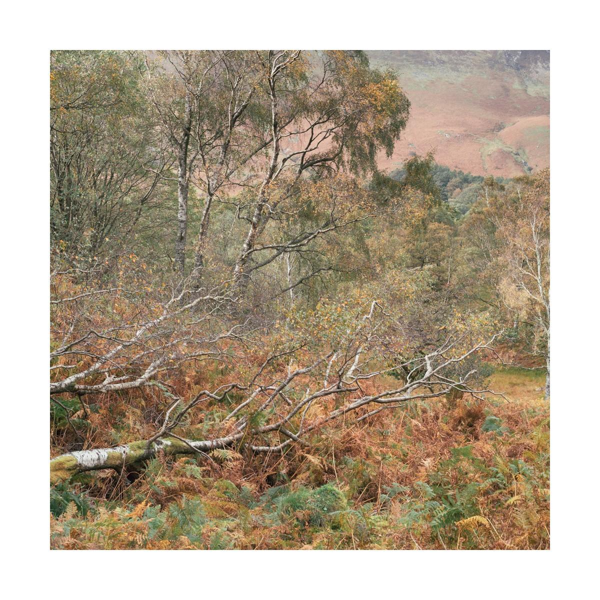 Borrowdale Autumn Details