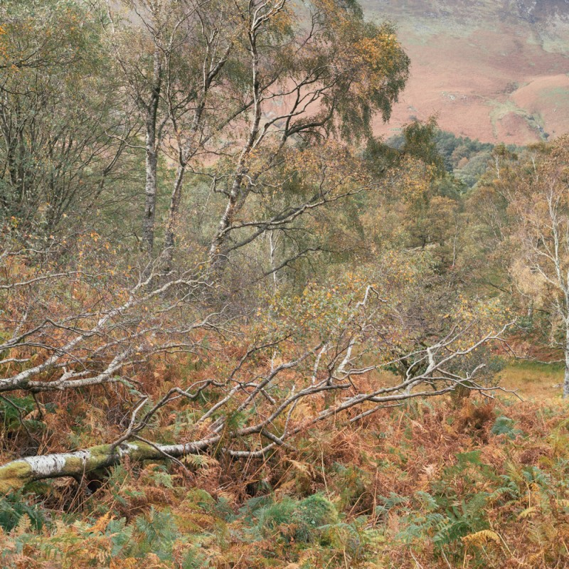 Into Thirlmere