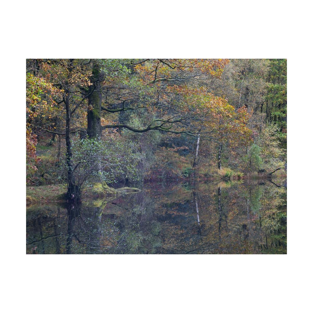 Yew Tree Tarn Autumn