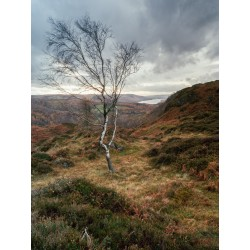 Holme Fell Tree