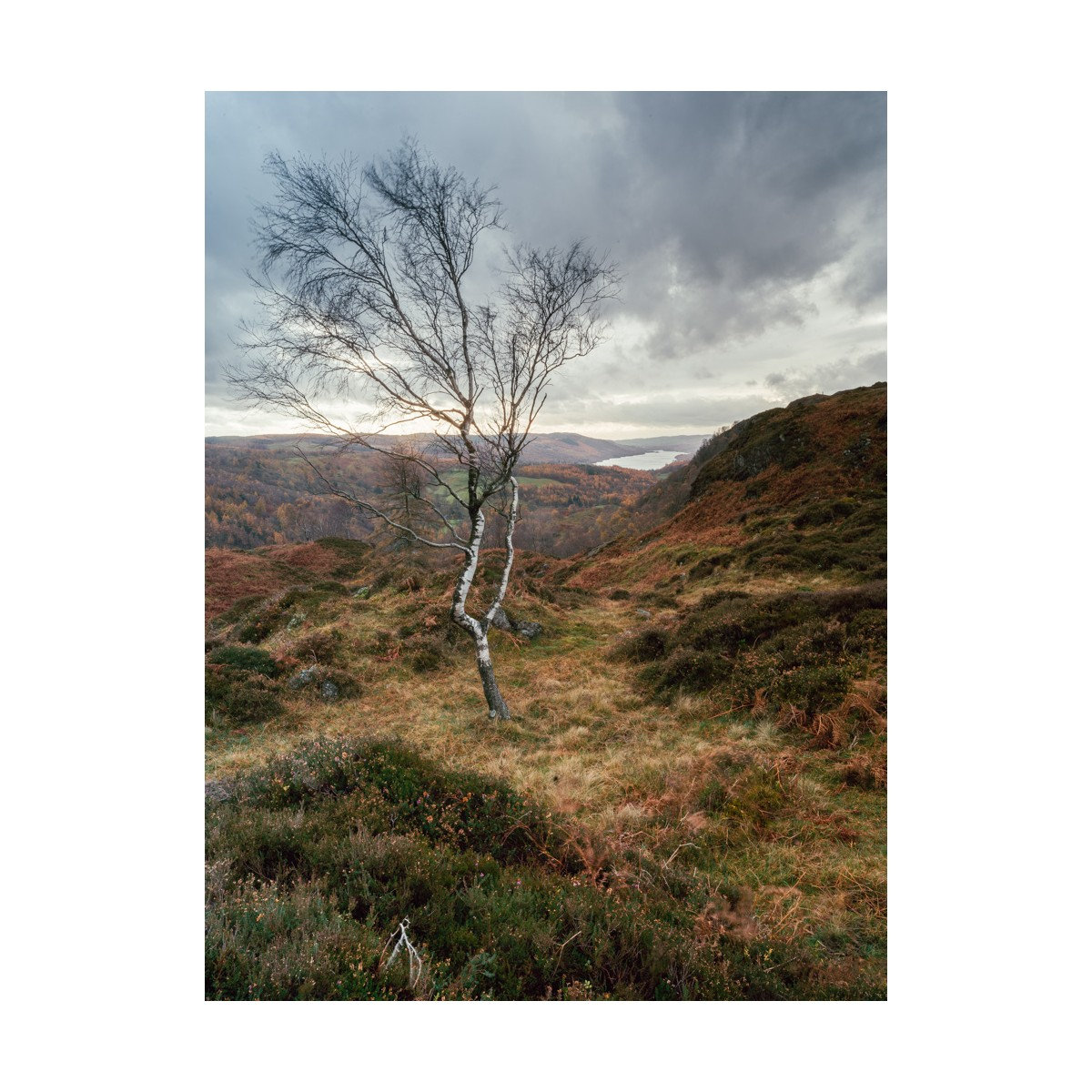 Holme Fell Tree