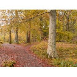 Borrowdale Woodland Scene