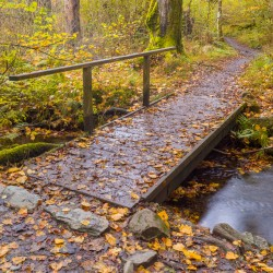 Borrowdale Woodland Walk