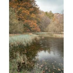 Yew Tree Tarn Autumn Portrait