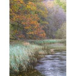 Yew Tree Tarn Autumn Portrait II