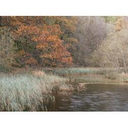 Yew Tree Tarn Autumn III