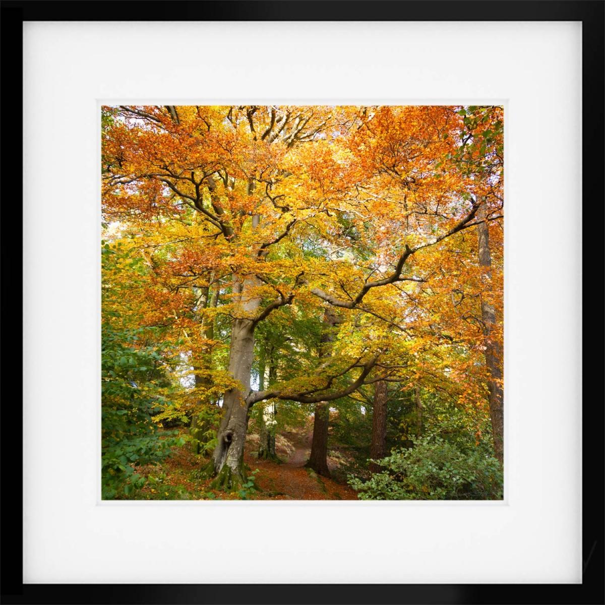 Autumn Squared