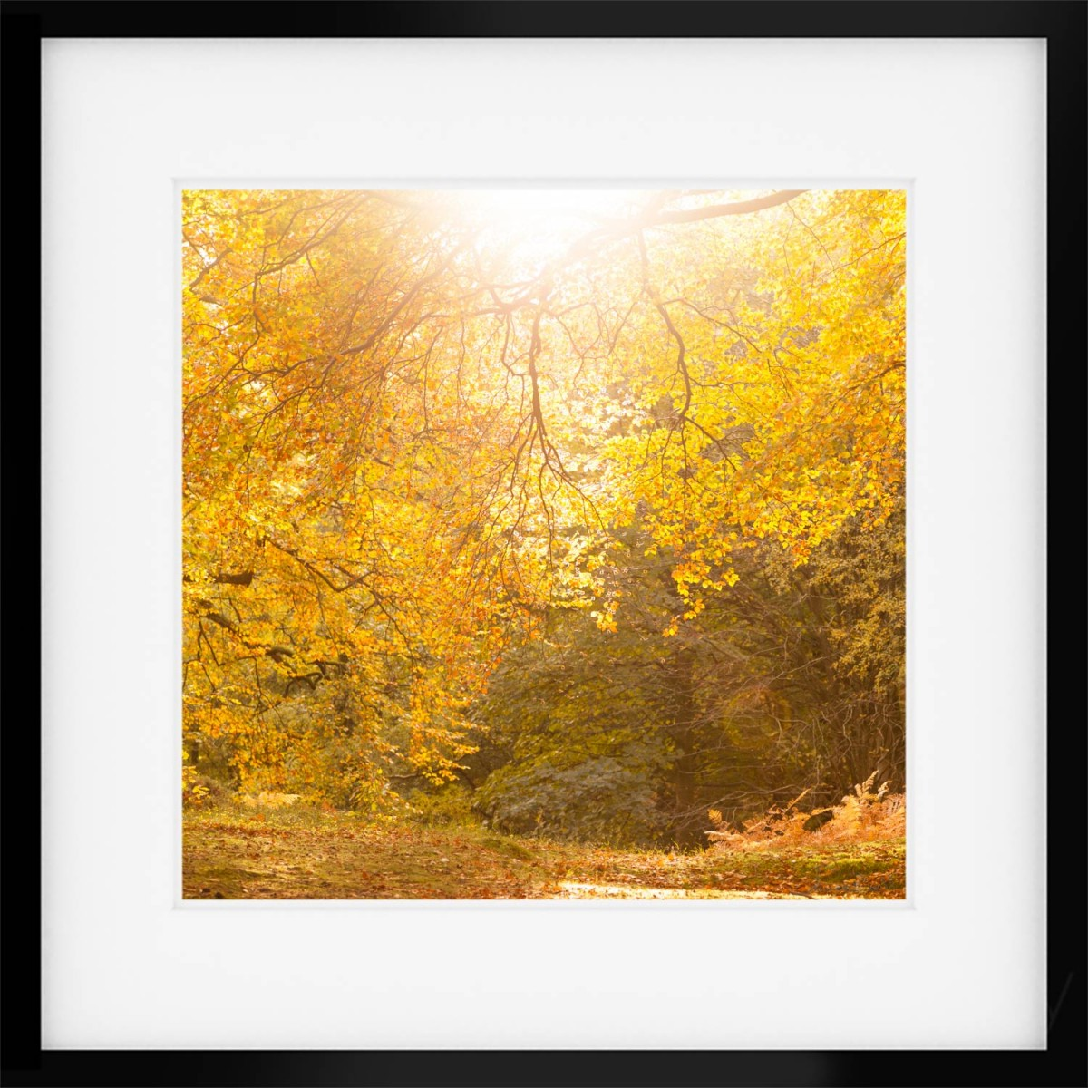 Under the Sun Autumn Print