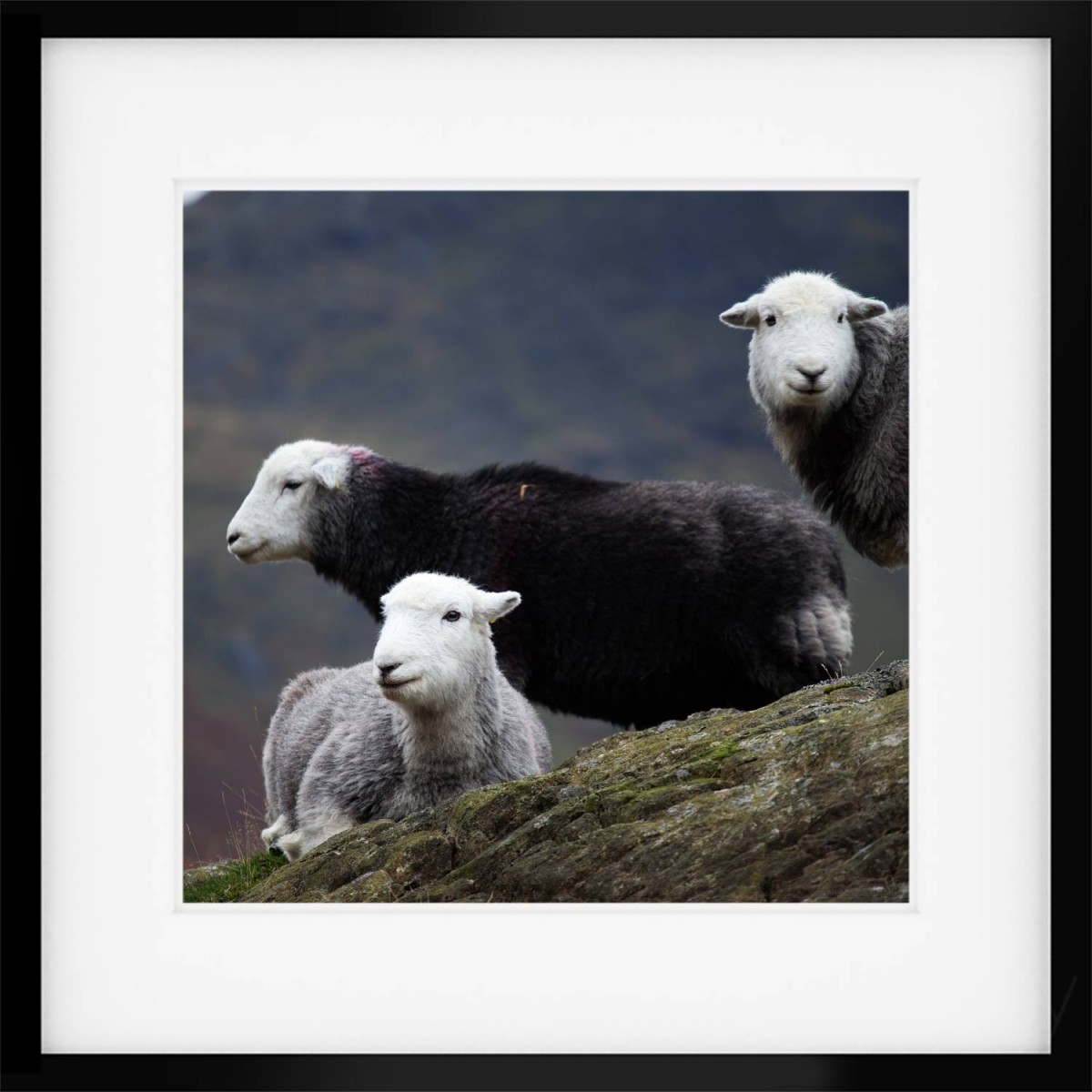 Over There, Where. Herdwick Print