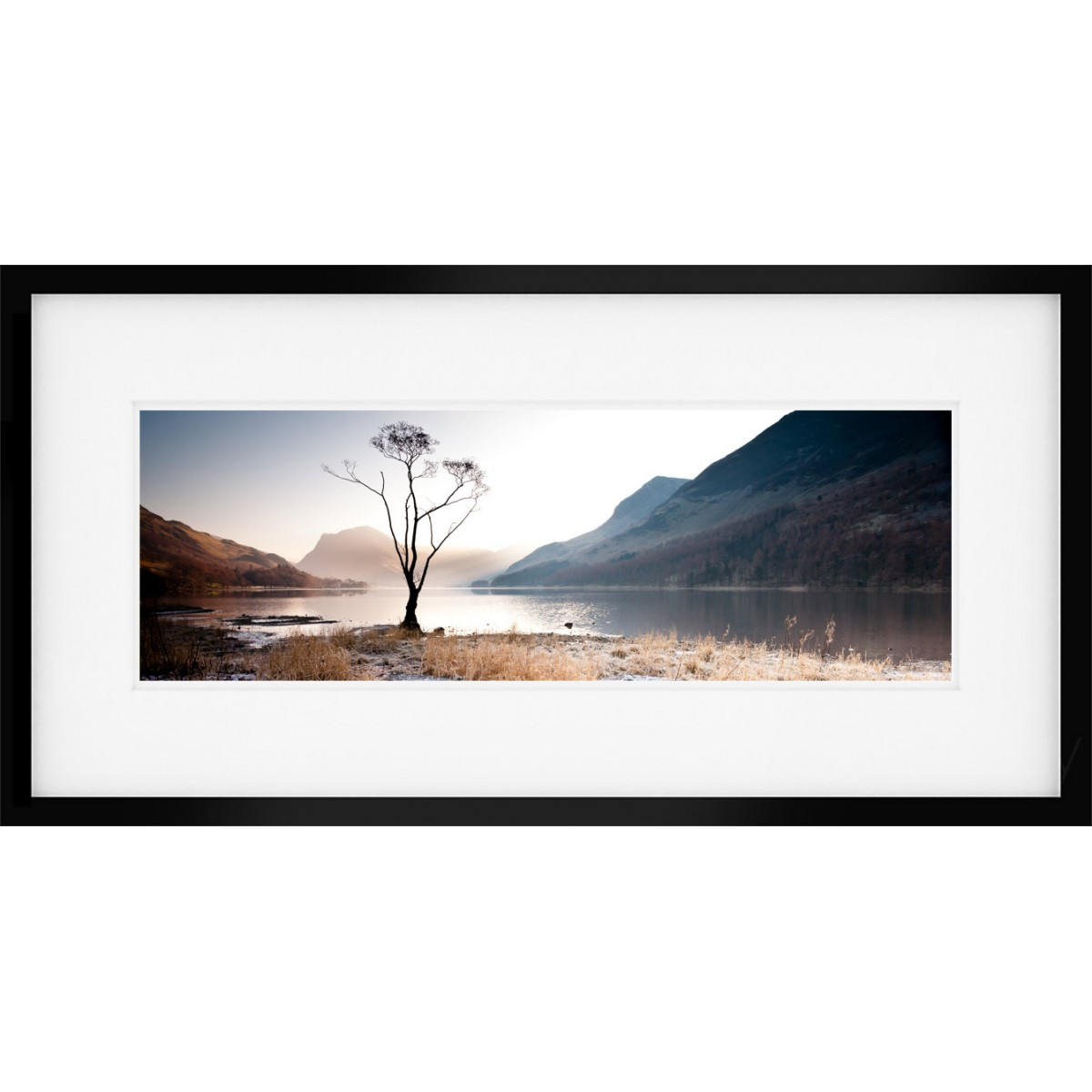 Buttermere Tree View Panoramic Print