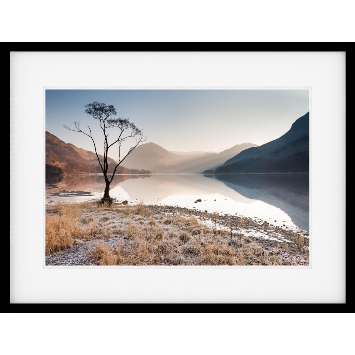 Buttermere Tree Framed Print
