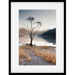Buttermere Tree V Framed Print