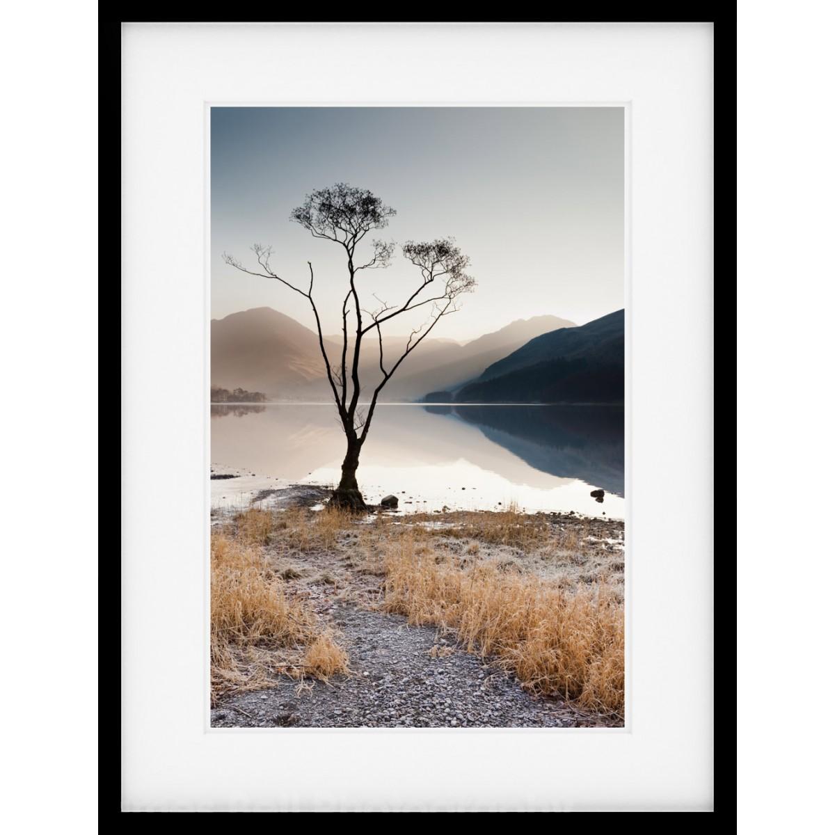 Buttermere Tree V Framed Print