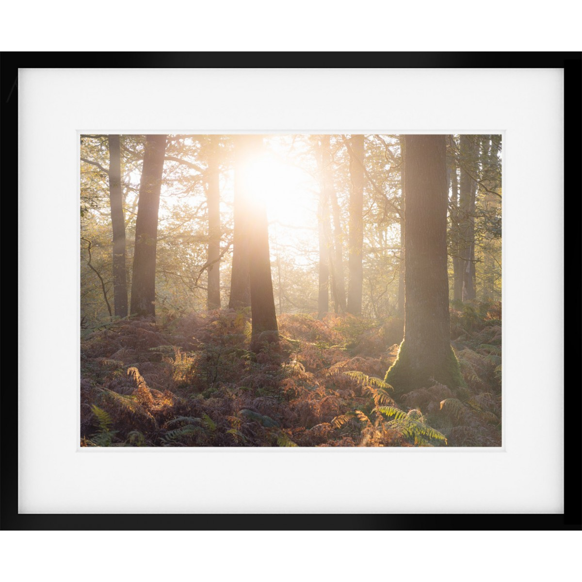 Woodland Sunburst Framed Print
