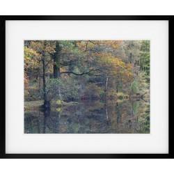 Yew Tree Tarn Autumn Framed Print