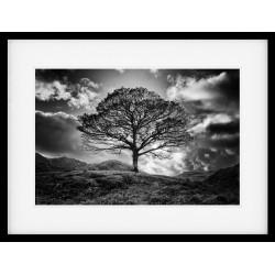 Langdale Oak Mono Framed Print