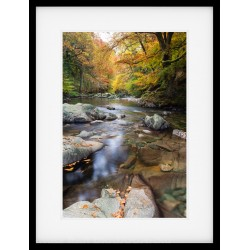 Autumn Depths Framed Print