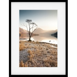 Buttermere Tree Framed Print