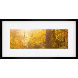 Amazing Light Wide Framed Print