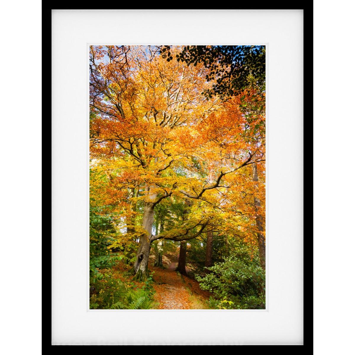 Amazing Autumn Colour Framed print