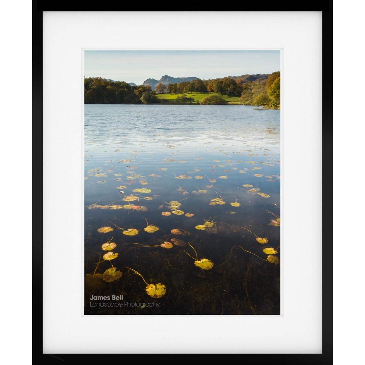 Loughrigg Tarn Lillies Framed Print