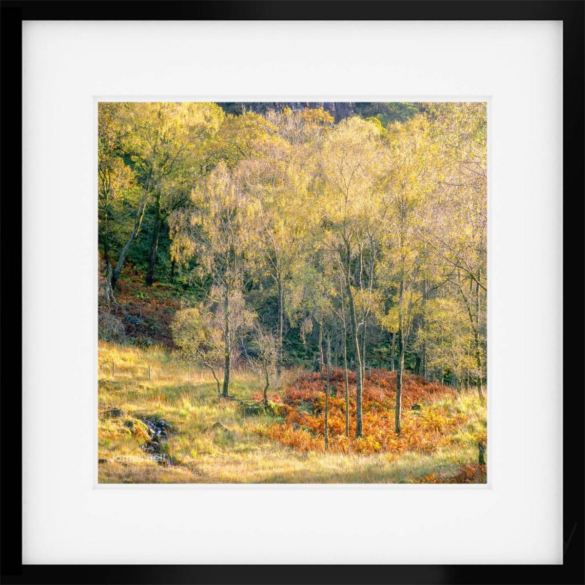 Borrowdale Autumn Framed Print