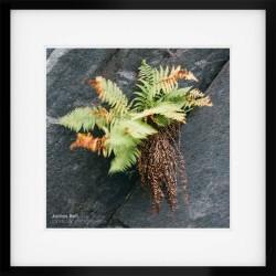 Borrowdale Fern framed print