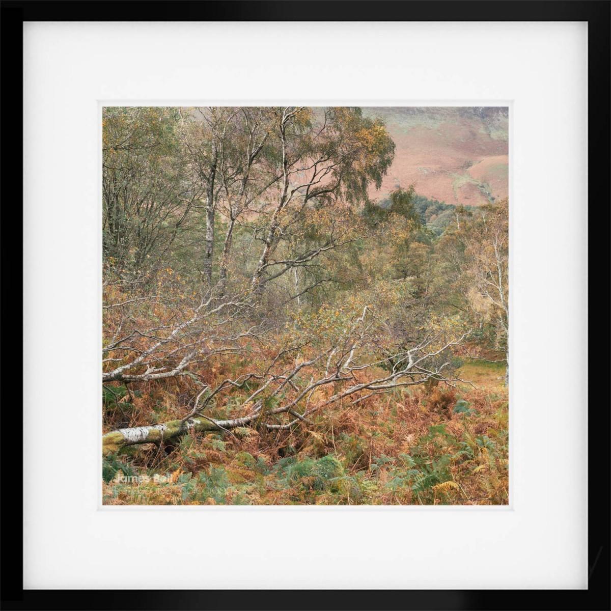 Borrowdale Autumn Details framed print