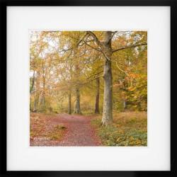 Borrowdale Woodland Framed Print