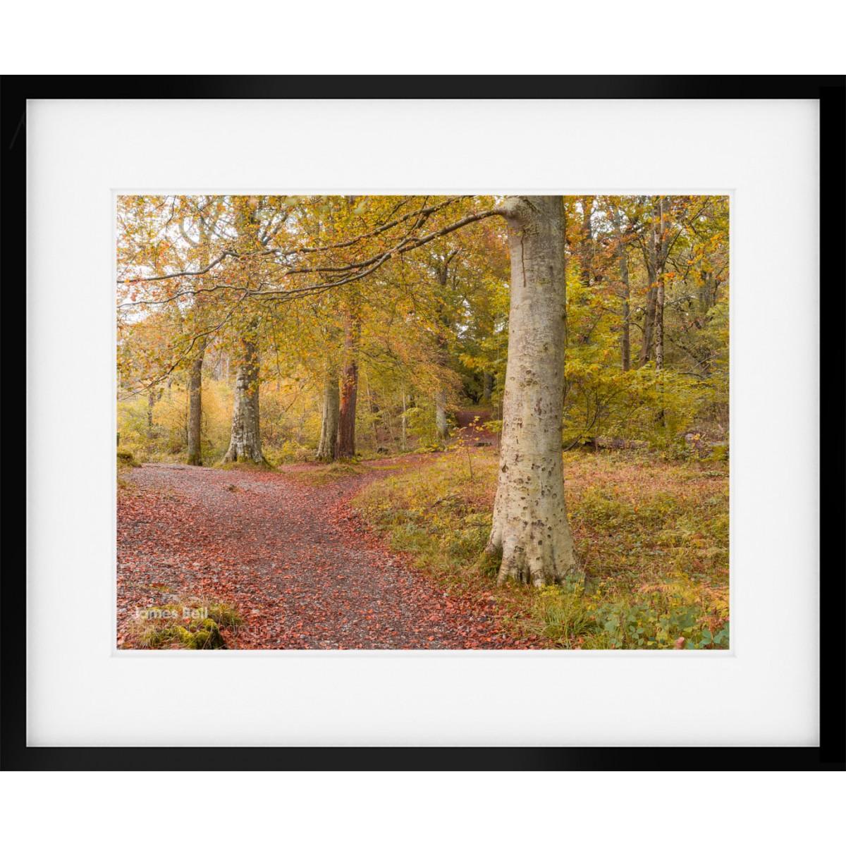 Borrowdale Woodland Scene Framed Print