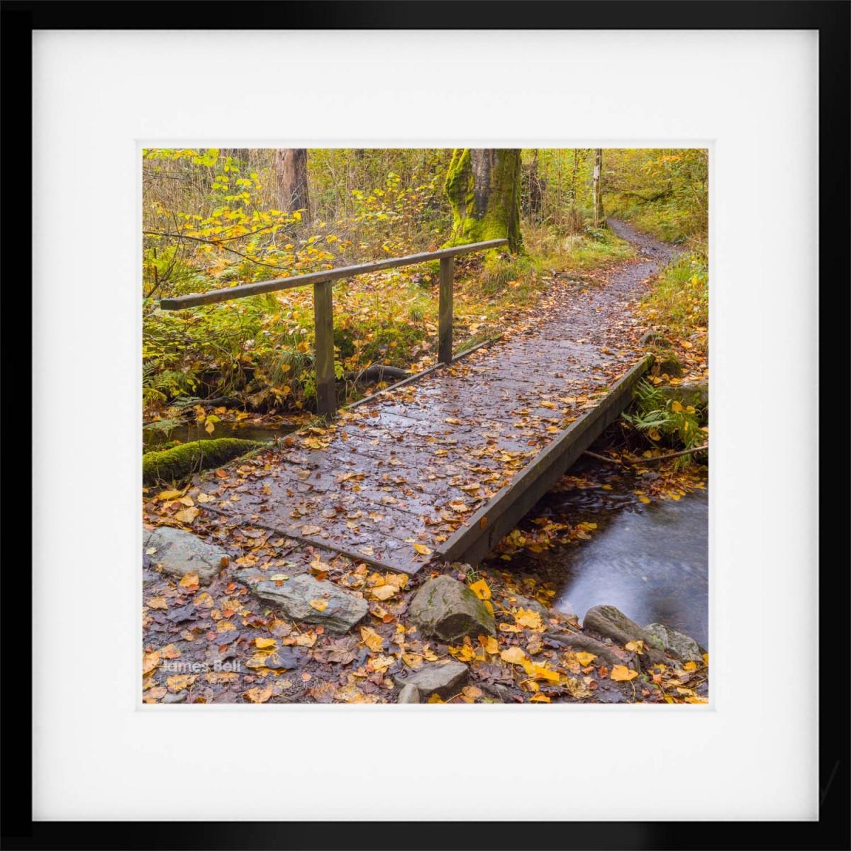 Borrowdale Woodland Walk framed print