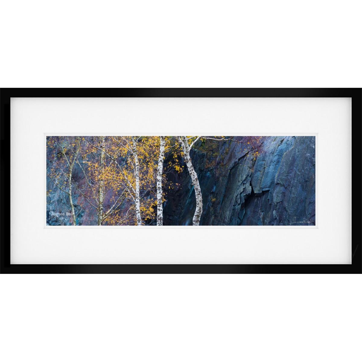 Silver Birch Contrast framed print