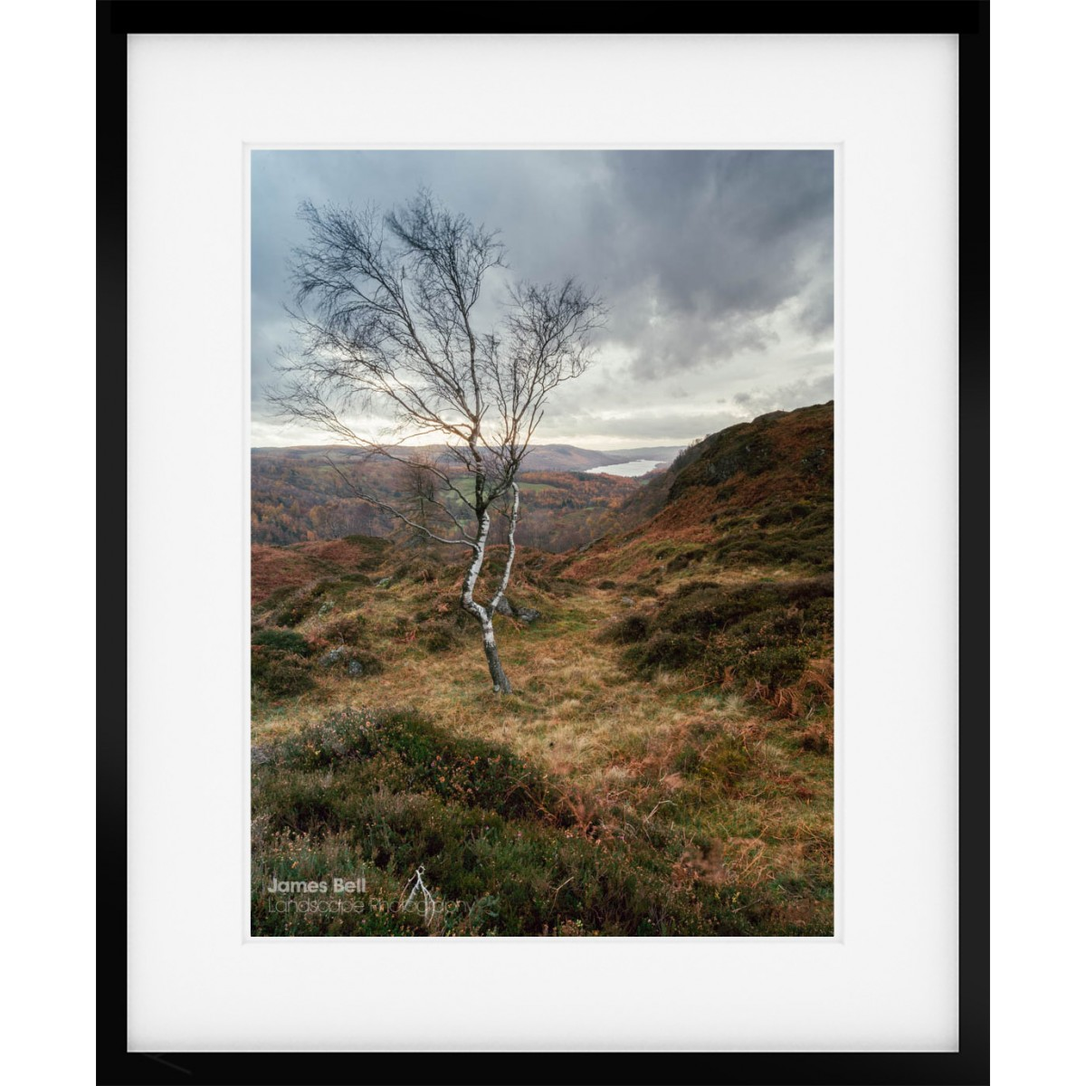 Holme Fell Tree framed print