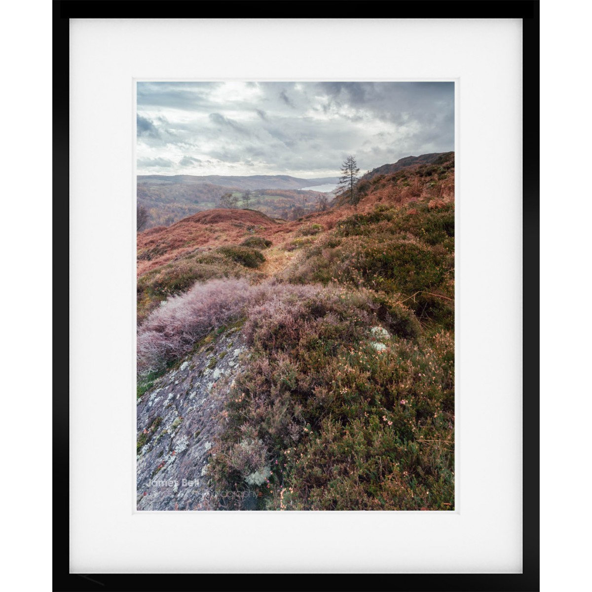 Holme Fell Heather framed print
