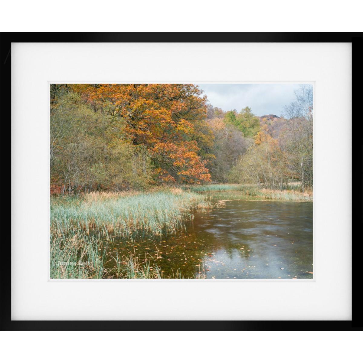 Yew Tree Tarn Autumn II framed print