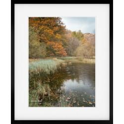 Yew Tree Tarn Autumn Portrait framed print