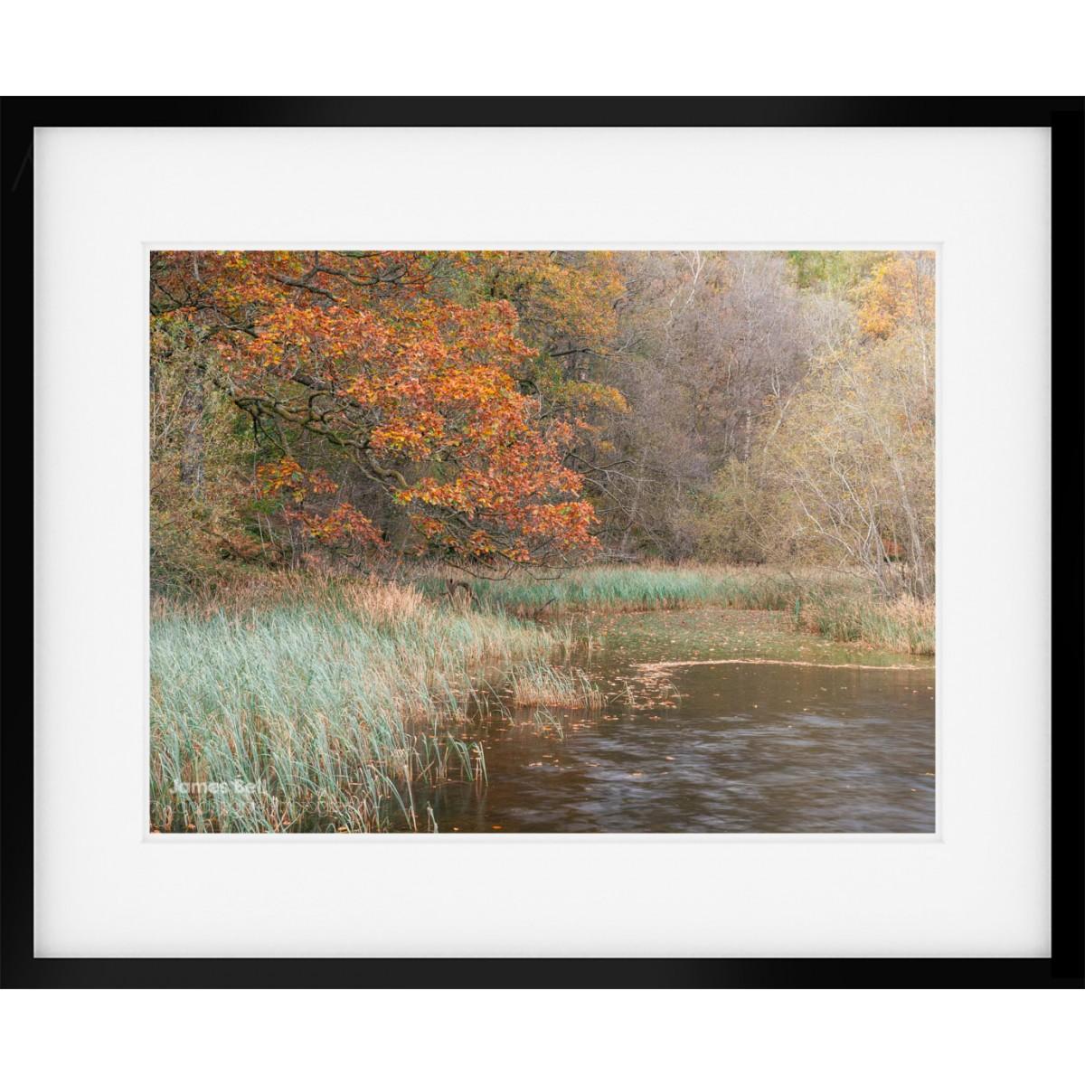 Yew Tree Tarn Autumn III framed print