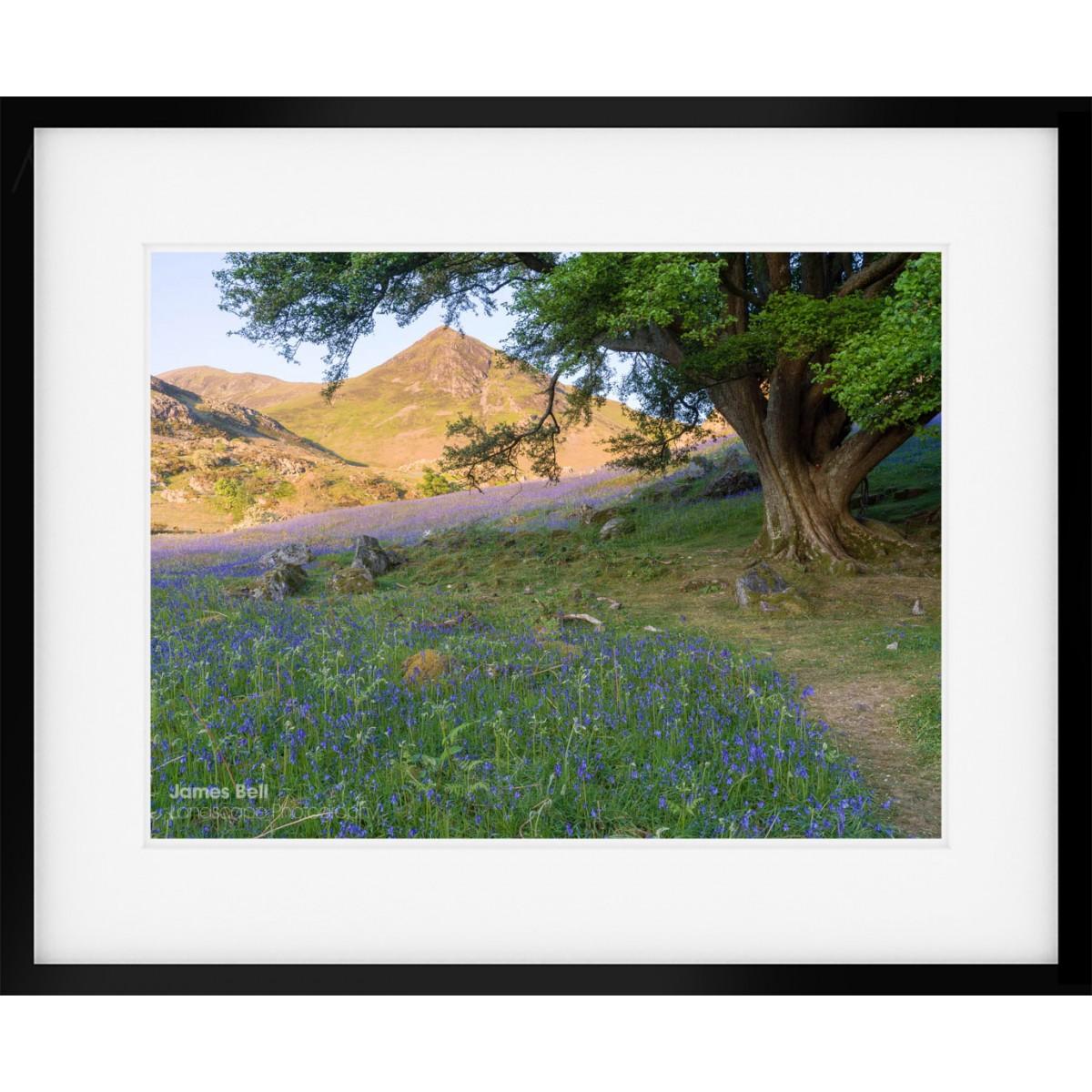 Rannerdale Bluebells II framed print