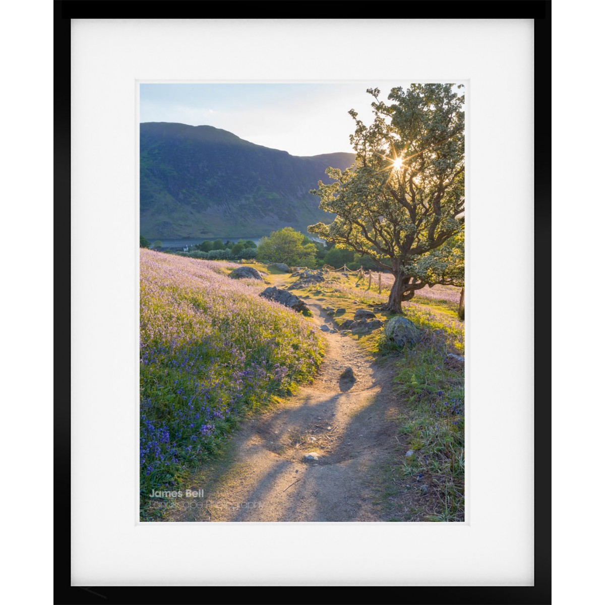 Rannerdale Bluebells framed print