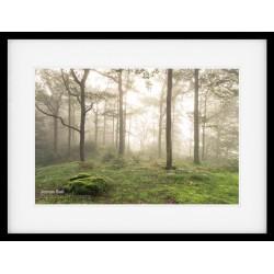 Woodland Dawn framed print