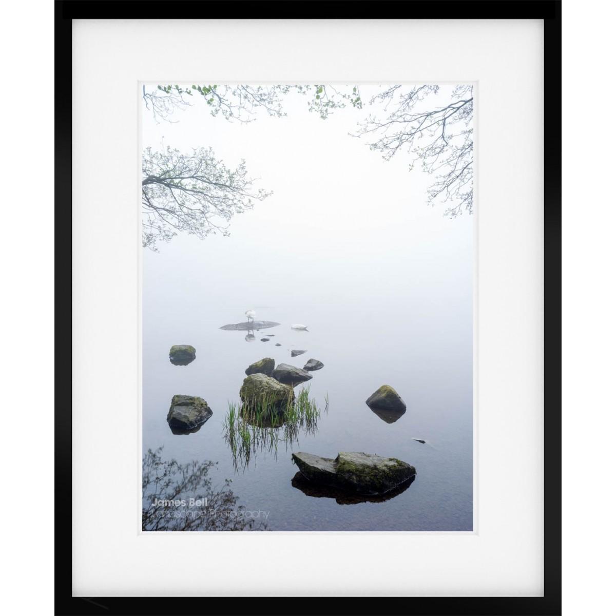 Sleeping Swans framed print