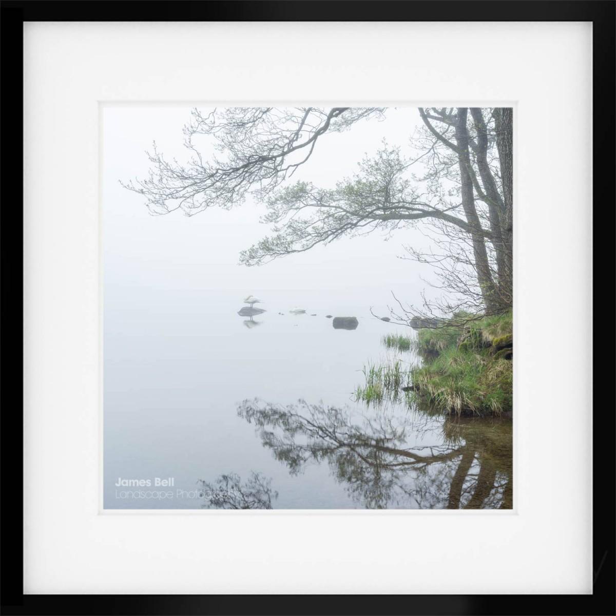 Sleeping Swans Square framed print